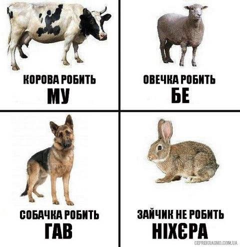 ce_zajchyk